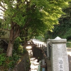 永福寺跡:100%パグ&50%パグと朝のお散歩