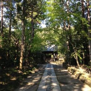 美しい寺と古き良き鎌倉の小道:寿福寺