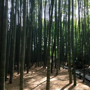 孟宗竹が創り出す贅沢空間:報国寺