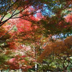 紅葉の覚園寺