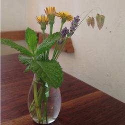 閑静な二階堂エリアのカフェ:モグラ食堂